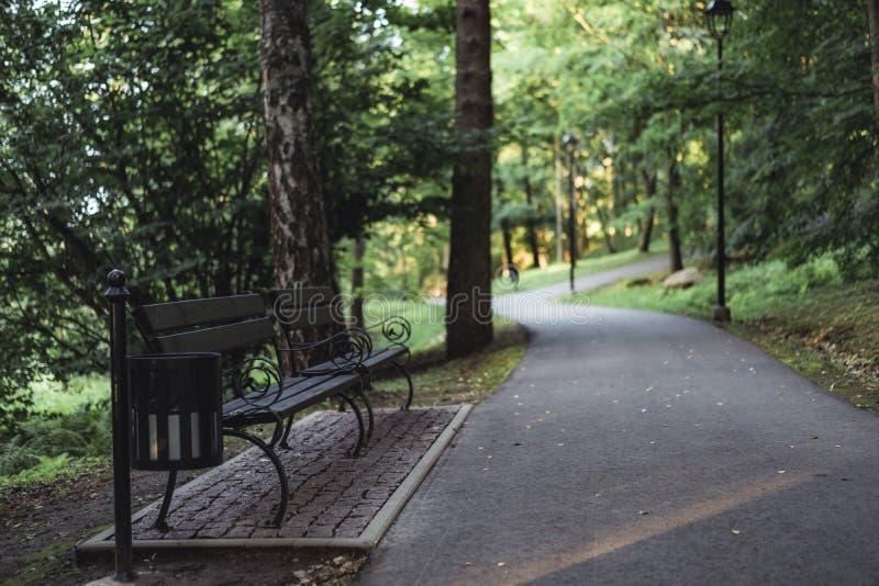 路的喜怒无常的照片在一个公园,在成为不饱和的森林之间-, 库存照片