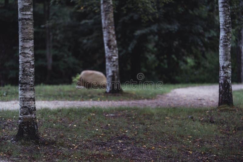 路的喜怒无常的照片在一个公园,在成为不饱和的森林之间-, 库存图片