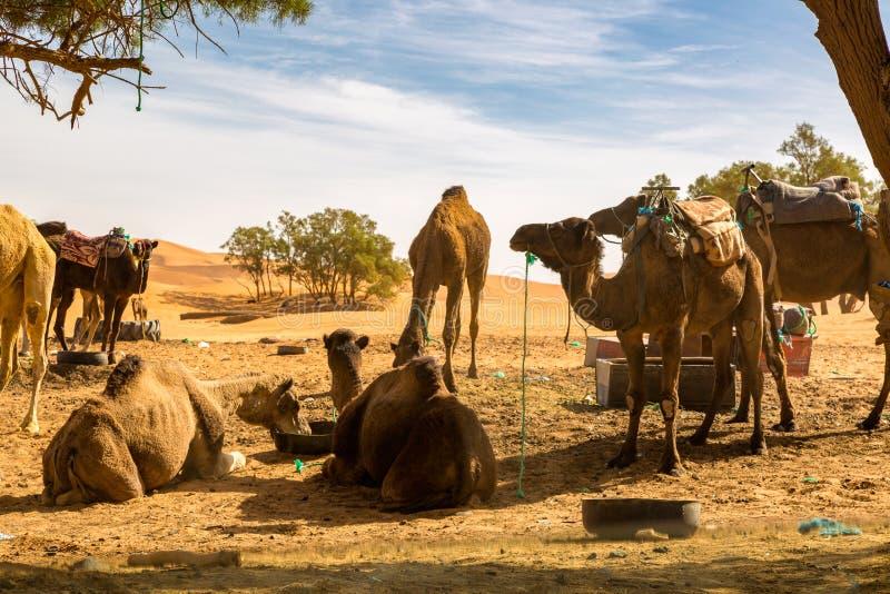 路的基于通过沙漠 免版税库存照片