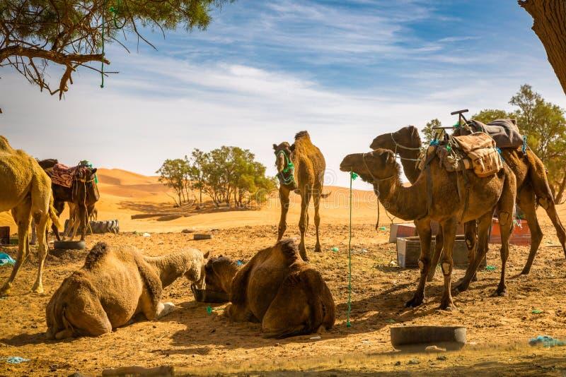 路的基于通过沙漠 免版税库存图片