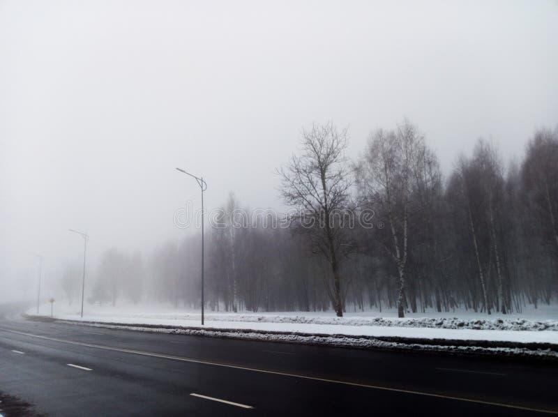路的森林全部在雾 免版税库存图片
