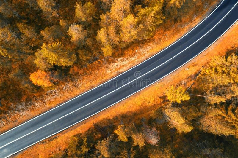 路的鸟瞰图在日落的秋天森林里在白云岩 免版税图库摄影