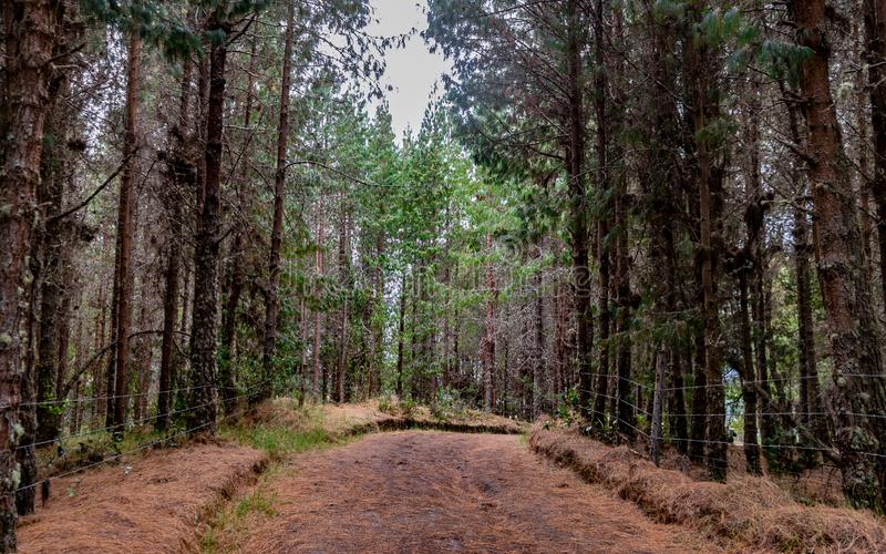 路线毗邻由杉木和覆盖着与它的桔黄色叶子B 库存照片