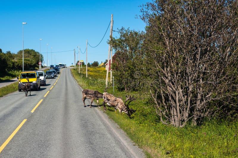 路线862在特罗姆斯,挪威北部 库存图片