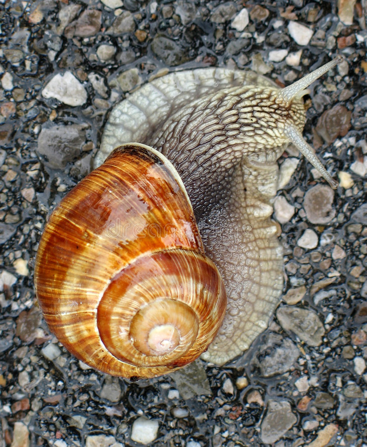 路蜗牛 免版税图库摄影