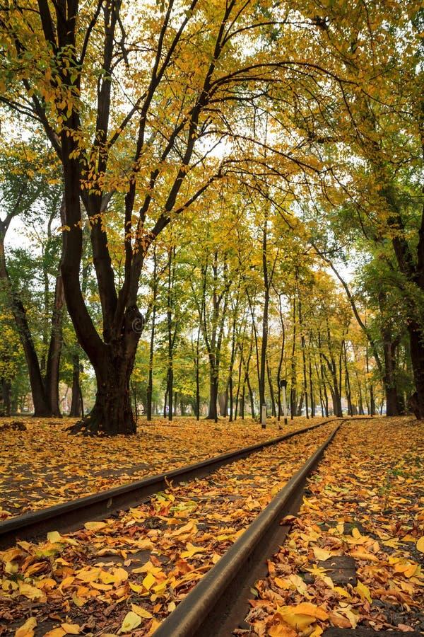 路轨在城市停放与树和下落的黄色秋叶 库存照片