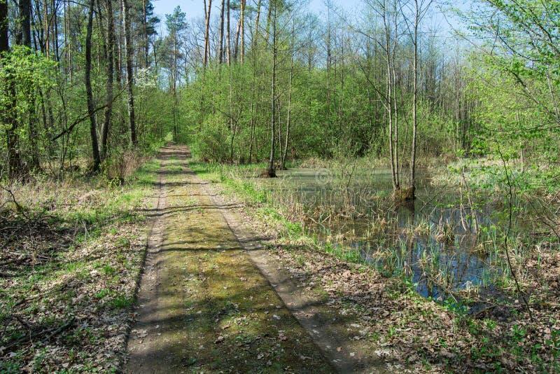 路通过一个湿软的森林 免版税库存照片