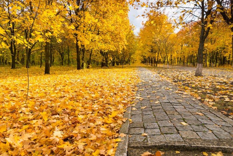 路通过五颜六色的秋天森林地 库存图片