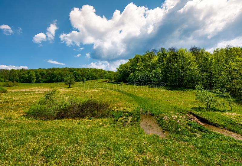 路通过在森林中的山草甸 免版税图库摄影