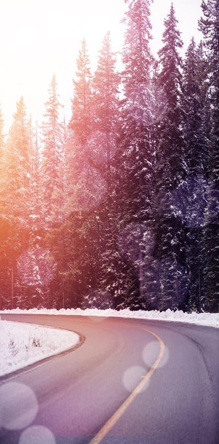 路通过多雪的森林 皇族释放例证