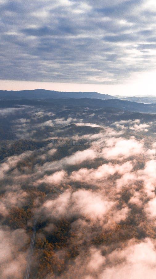 路通过有有薄雾的绿色云杉的森林 库存图片