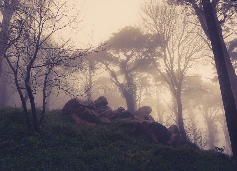 路通过有雾的一个金黄森林 图库摄影