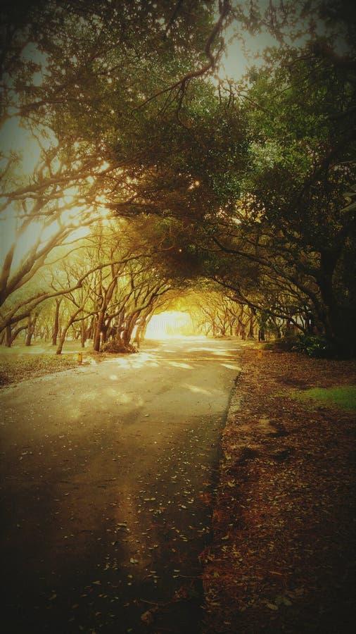 路通过树木天棚 免版税库存图片