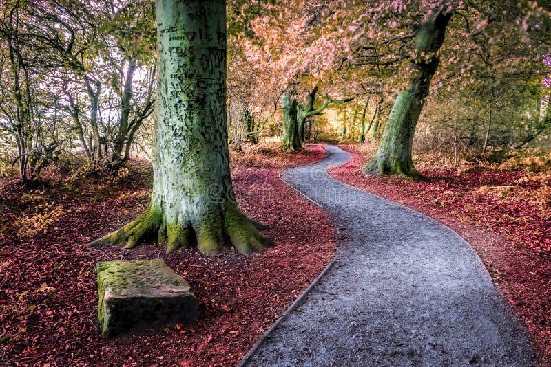 路通过森林地区,在秋天 图库摄影