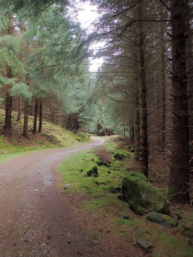 路通过森林地 免版税库存图片