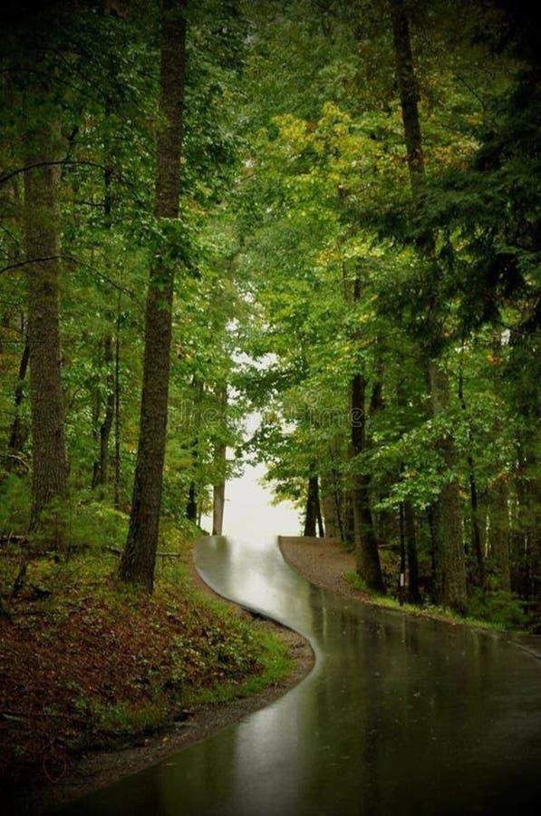 路通过森林