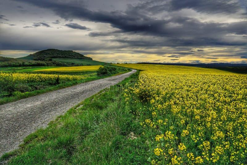 路通过油菜籽领域 免版税库存图片