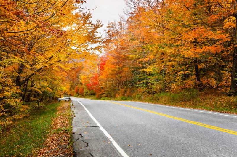 路通过秋天森林 图库摄影