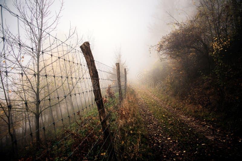 路通过秋天森林 免版税图库摄影