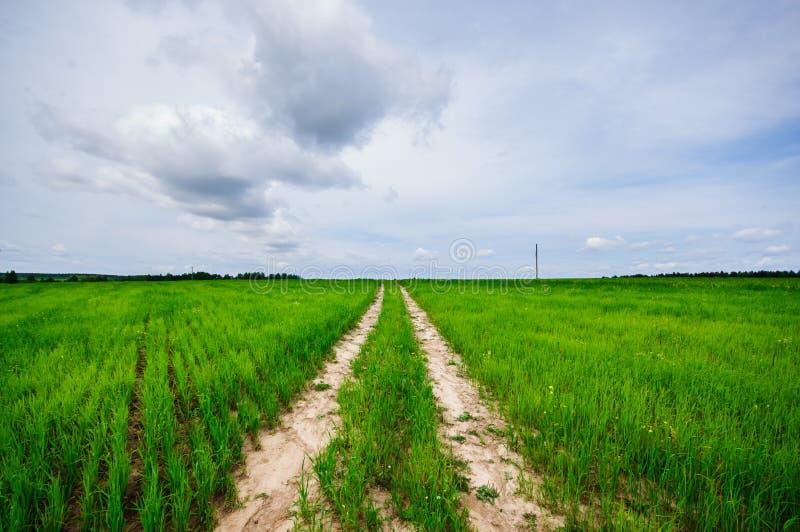 路通过象草的领域 库存图片