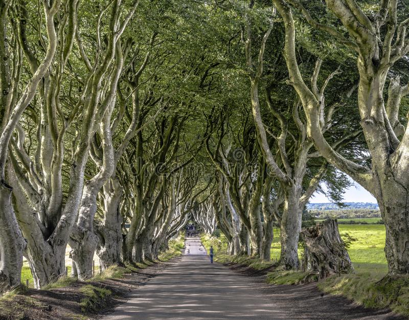 路通过黑暗的树篱胡同,Armoy,北爱尔兰 库存图片