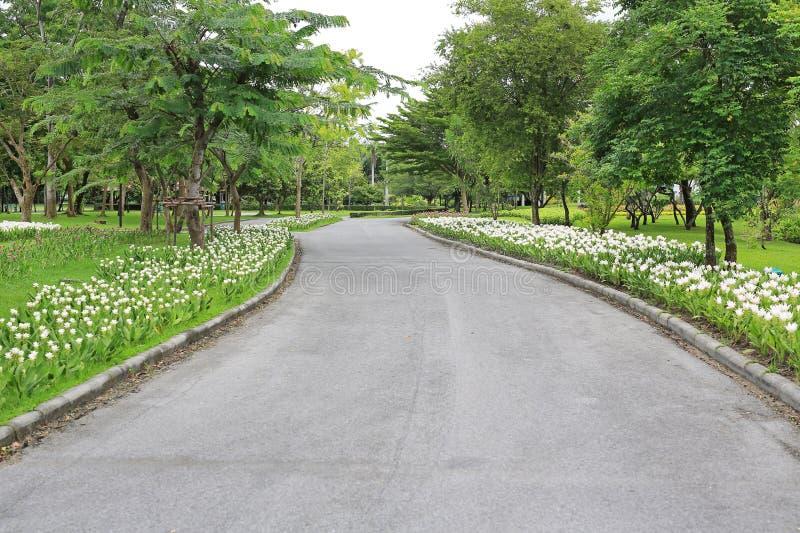 路道路在公园庭院的通过花和树早晨感觉的刷新了 库存图片
