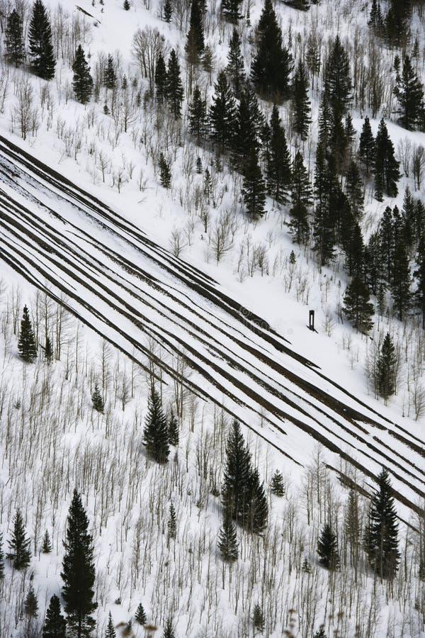路降雪结构树 免版税库存照片