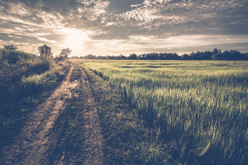 路领域和日落 免版税库存图片