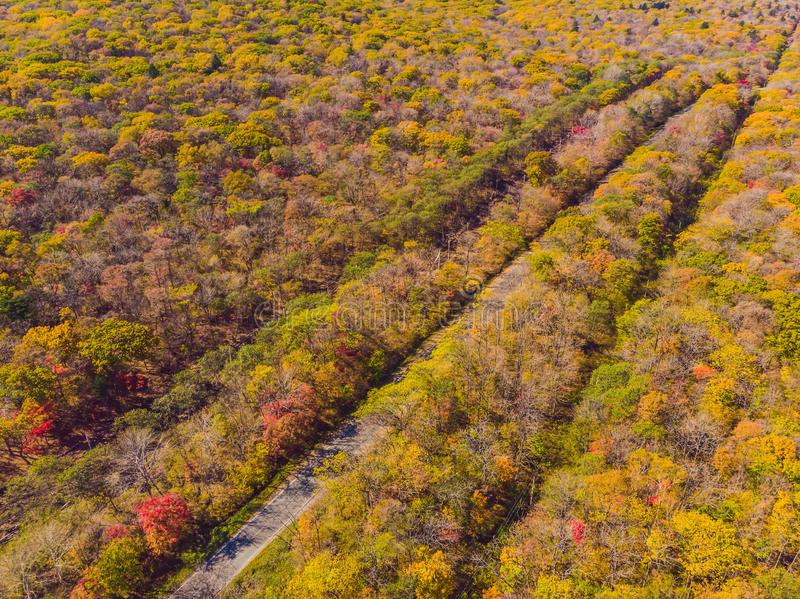 路鸟瞰图在日落的美丽的秋天森林里 与空的农村路,与红色的树的美好的风景和 免版税库存照片