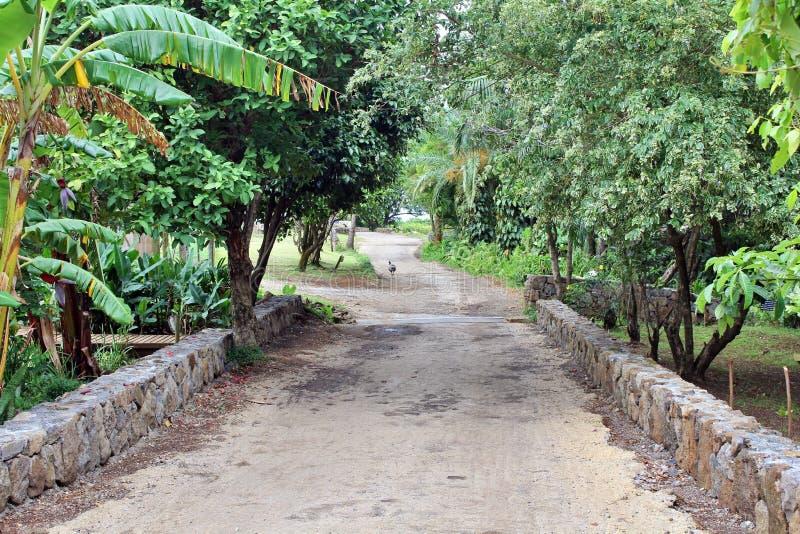 路,路在公园,毛里求斯 图库摄影