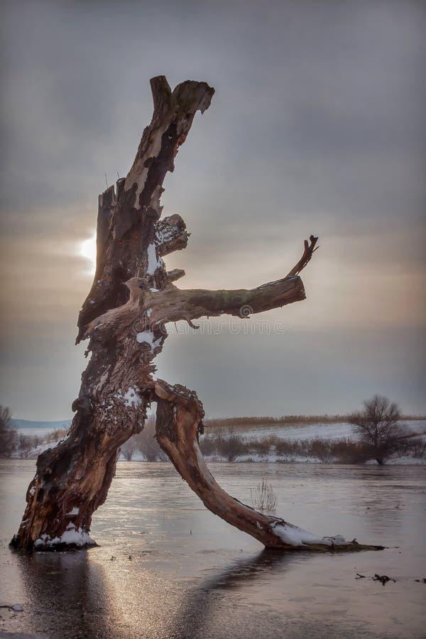 跳舞树 库存图片