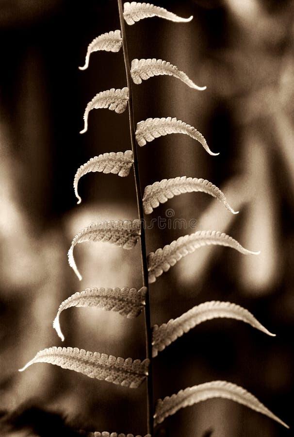 跳舞蕨叶子 图库摄影