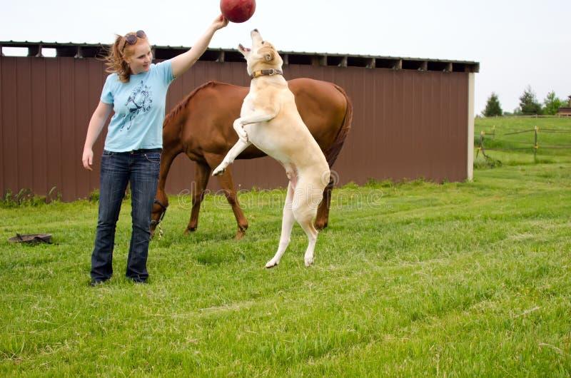跳跃为球的大狗 库存图片
