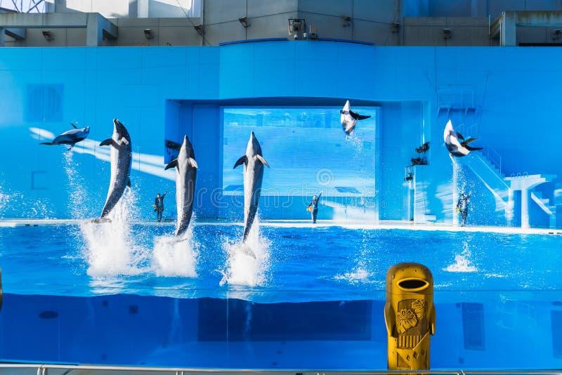 跳跃在天空中的横滨,日本3月13,2019海豚在八景岛海天堂展示 免版税库存图片