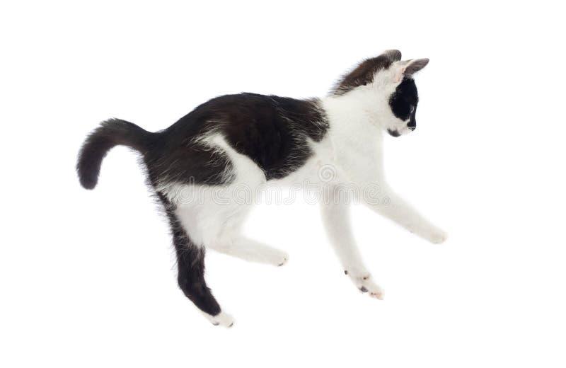 跳跃小逗人喜爱的猫落和 库存照片