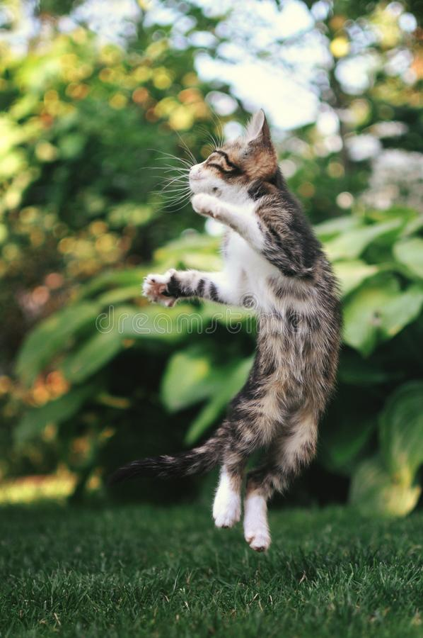 跳跃愉快的逗人喜爱的小猫外面 库存照片