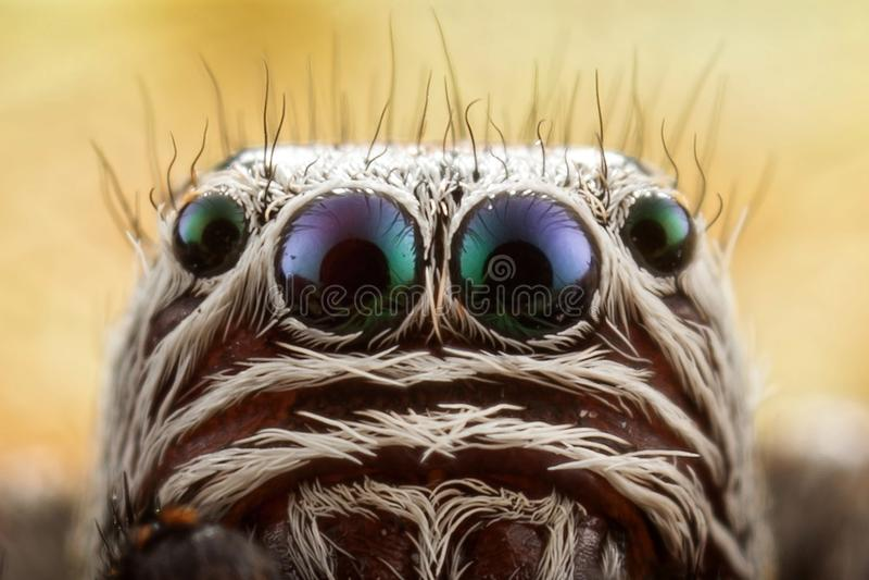 跳跃的蜘蛛画象 免版税库存图片