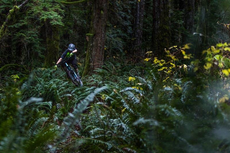 跳跃通过蕨的山骑自行车的人 免版税库存图片