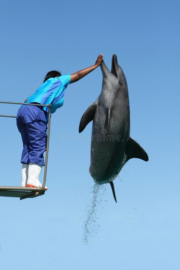 跳高的海豚 库存照片