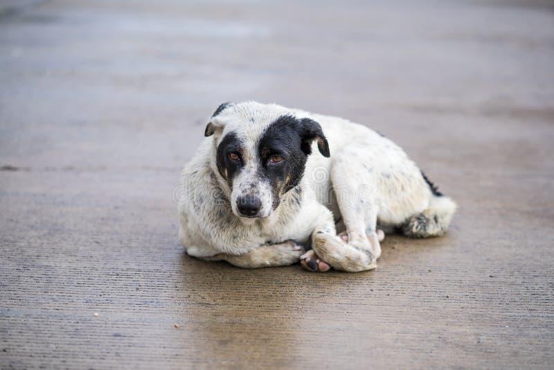 蹲下在路的狗在雨以后 库存照片