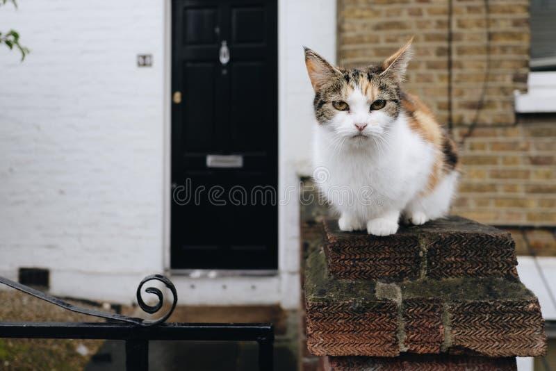 蹲下的农村猫 库存照片