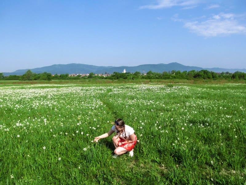 蹲在有白色黄水仙的草甸中的年轻成人女孩 一个花谷的旅游妇女在山背景  图库摄影