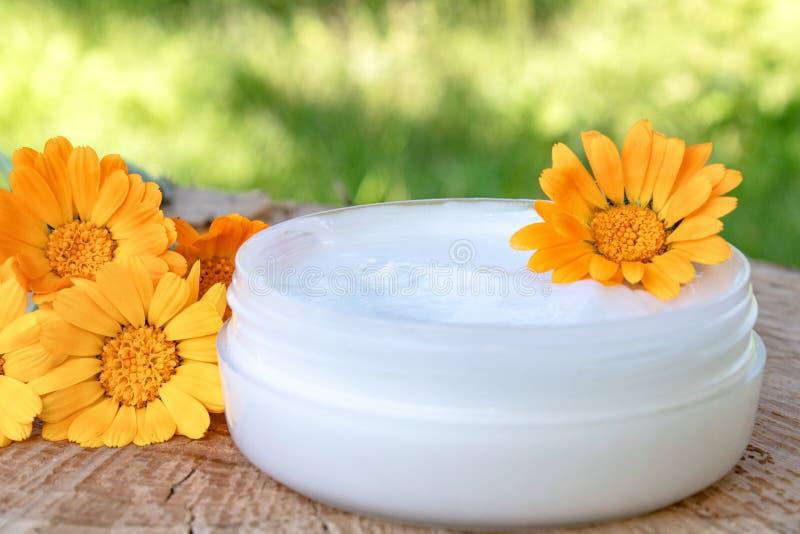 身体关心的奶油与金盏草 在木背景的新鲜的橙色金盏草花本质上 洗涤的化妆奶油 免版税库存照片