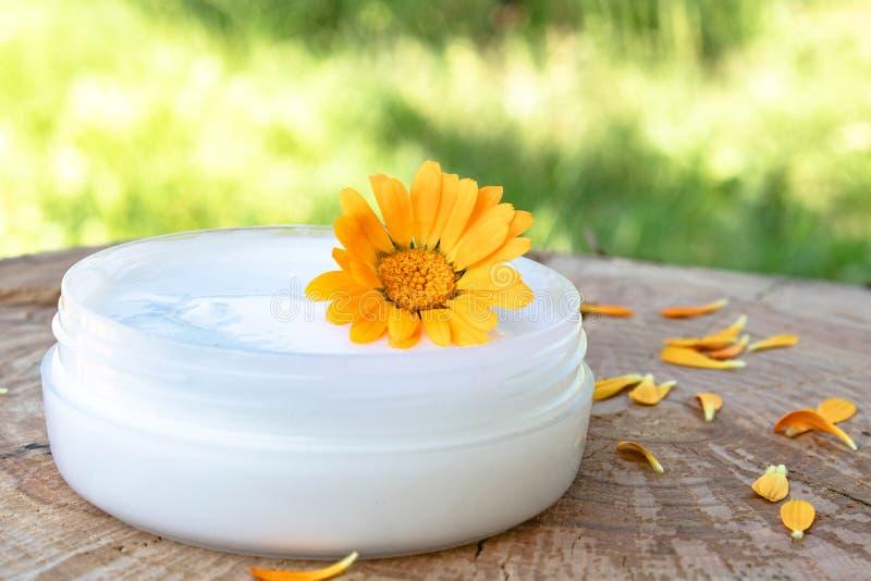身体关心的奶油与金盏草 在木背景的新鲜的橙色金盏草花本质上 洗涤的化妆奶油 图库摄影