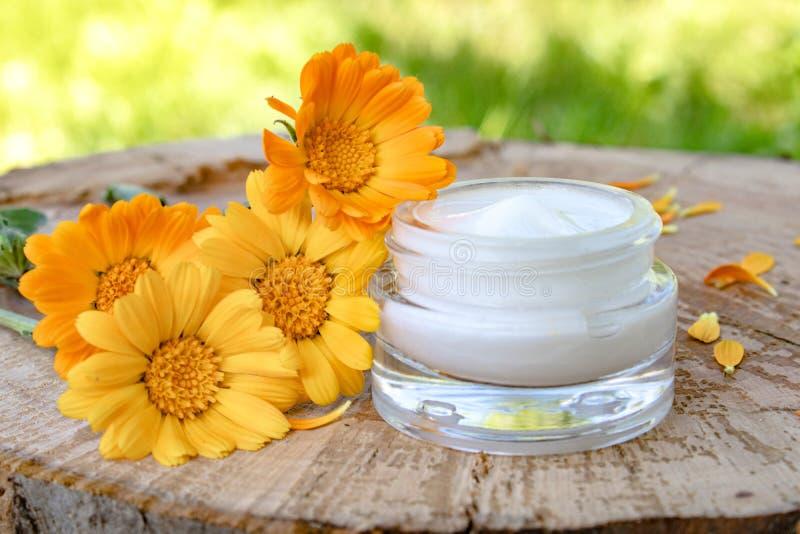 身体关心的奶油与金盏草 在木背景的新鲜的橙色金盏草花本质上 洗涤的化妆奶油 库存图片