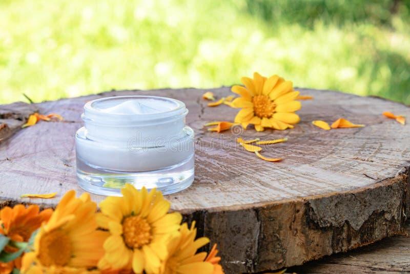 身体关心的奶油与金盏草 在木背景的新鲜的橙色金盏草花本质上 洗涤的化妆奶油 库存照片