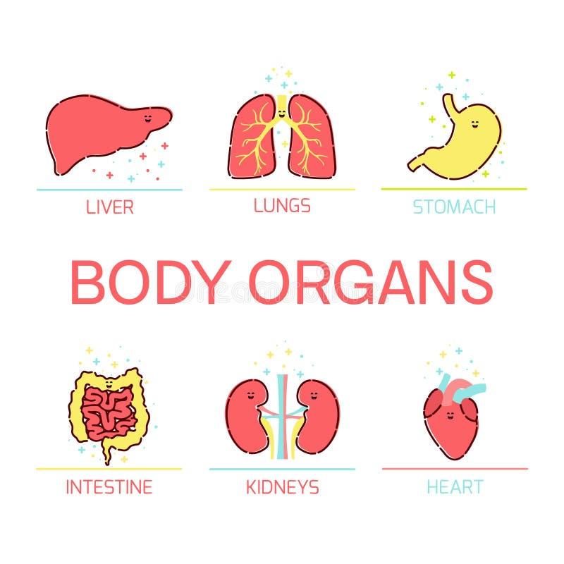 身体器官动画片集合 向量例证