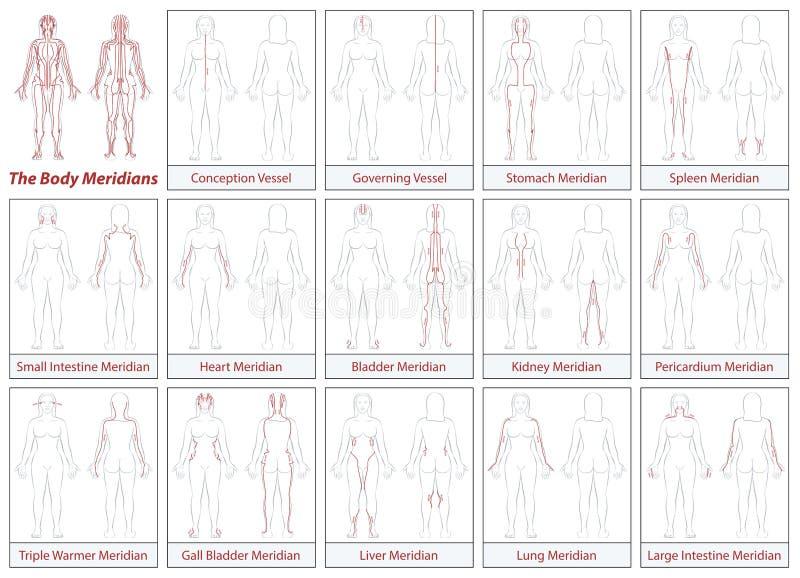 身体子午线图妇女流向 库存例证
