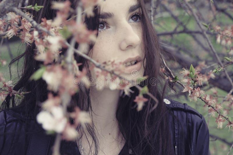 躲在樱花树枝上仰望 免版税库存照片