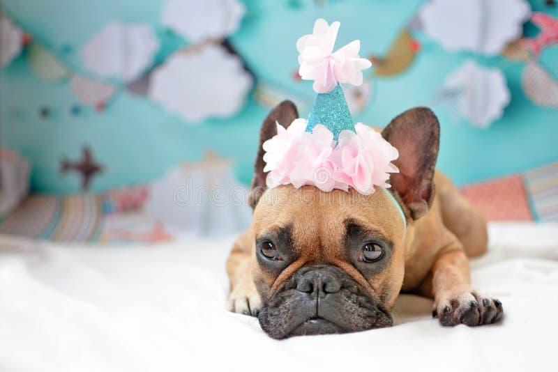 躺下在与桃红色生日帽子和浅蓝色党背景的地面的逗人喜爱的母法国牛头犬狗 免版税库存图片